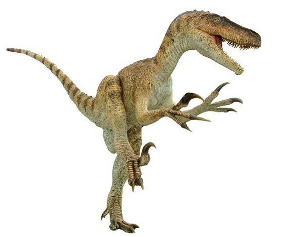 Utahraptor023